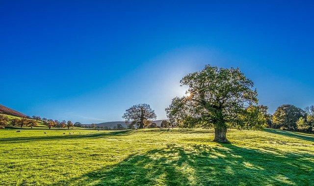 tree-2916763_640.jpg