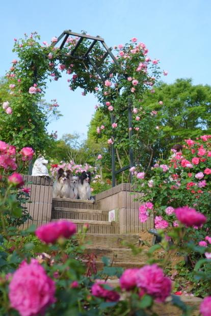 薔薇の公園202100088645