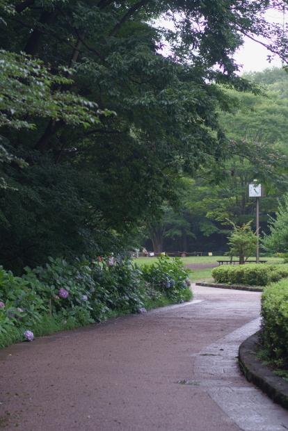 東高根公園ラックの黒い目最後20210705-170746