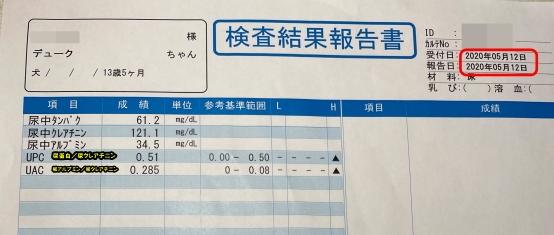 デューク 尿検査IMG_0782
