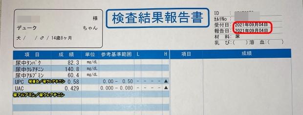 デューク 尿検査IMG_0783