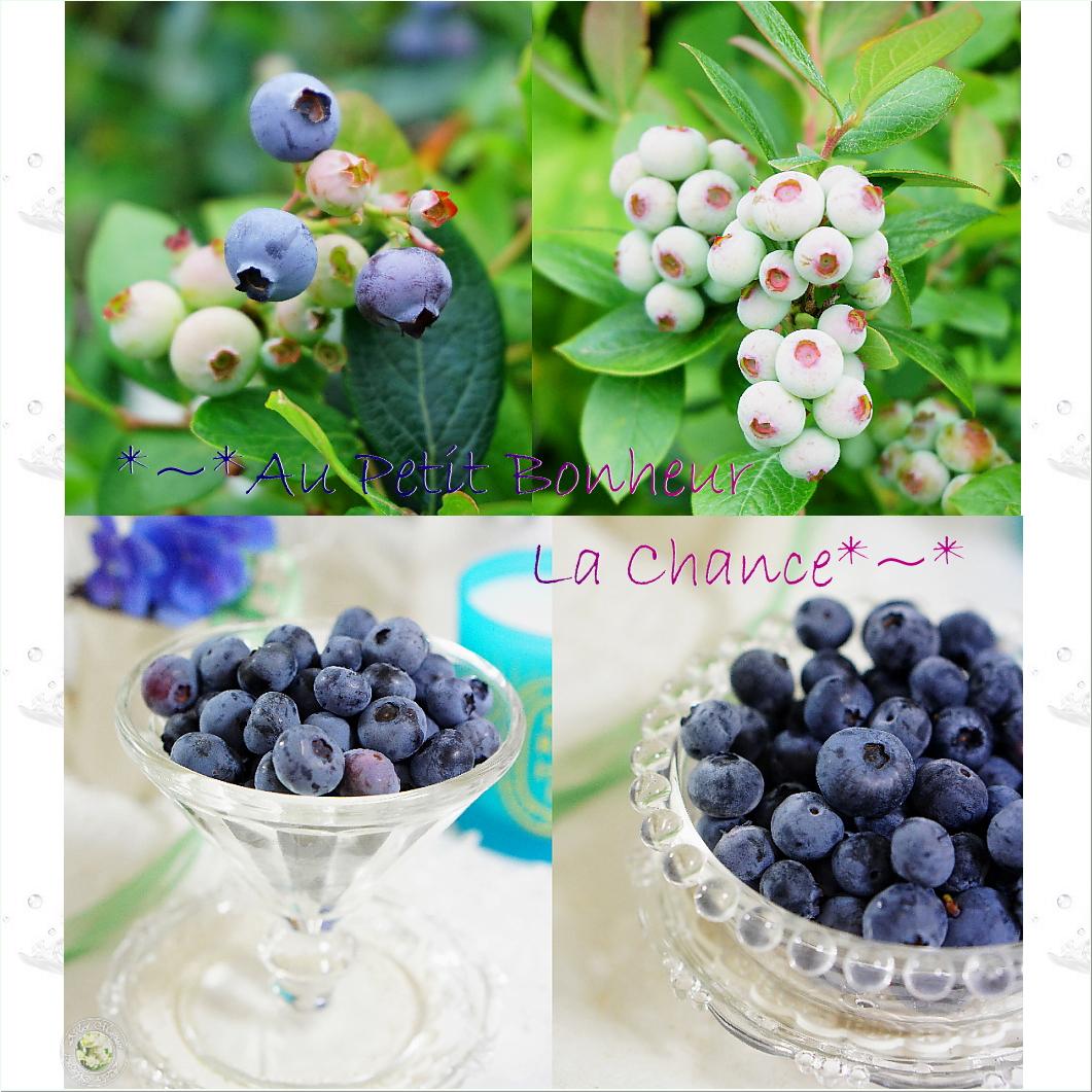6g-bberry.jpg