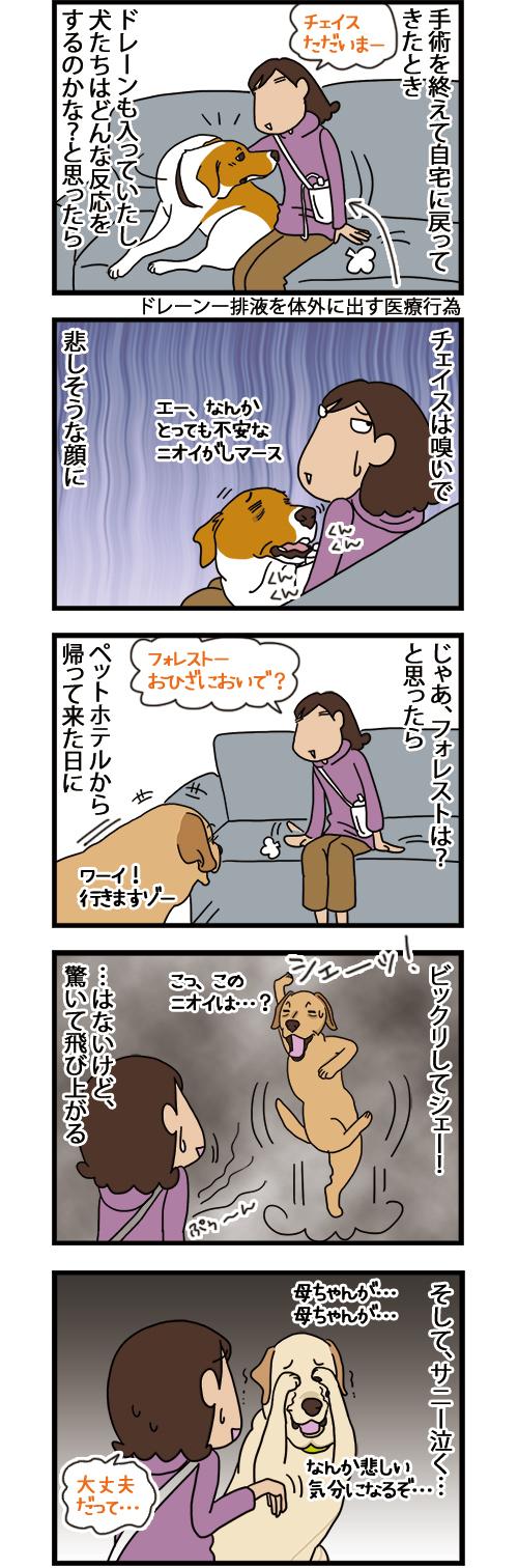 04102021_dogcomic.jpg