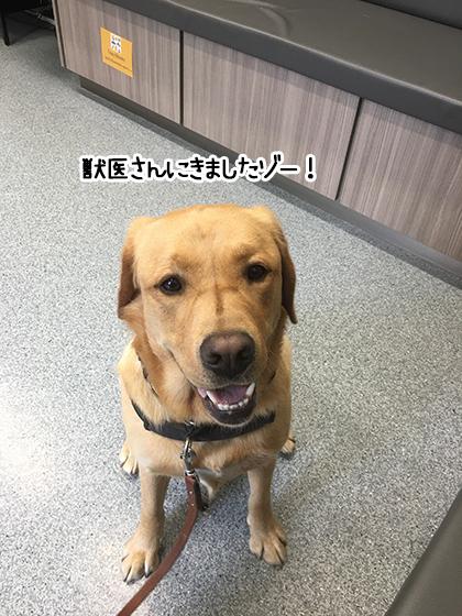11062021_dogpic2.jpg