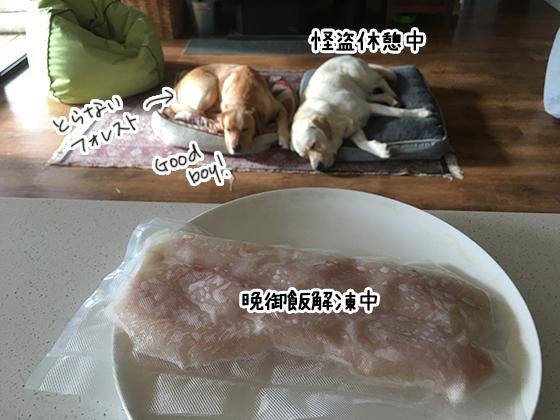 20062021_dogpic9.jpg