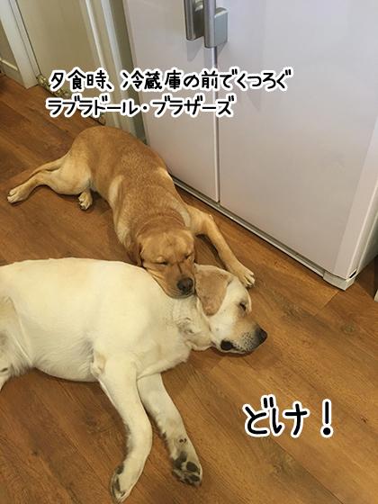23082021_dogpic2.jpg