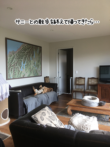 23082021_dogpic3.jpg