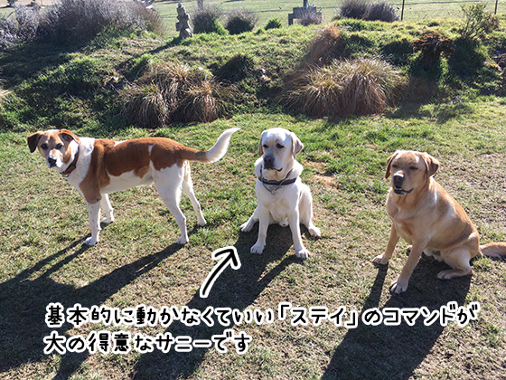 24082021_dogpic2.jpg