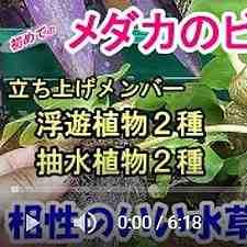 ビオトープ水生植物紹介動画