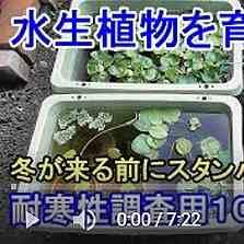 水生植物10種動画