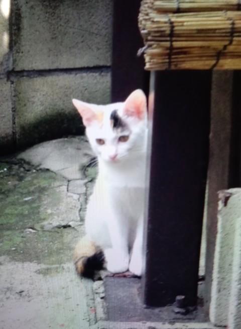 江戸川区平井:多頭飼育崩壊🚺2014年頃、遺棄されたメス猫