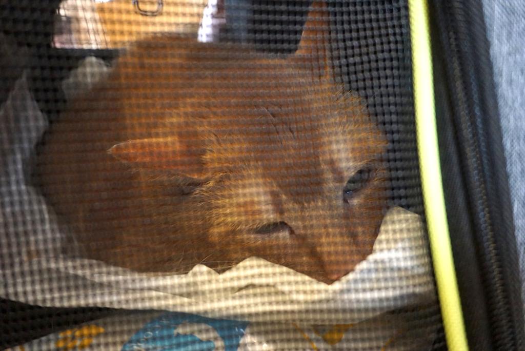 江戸川区平井:多頭飼育崩壊🚹プーチンくん:猫ドックの結果