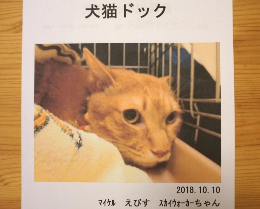 江戸川区平井:多頭飼育崩壊🚹ホワッツマイケルくん:猫ドックの結果