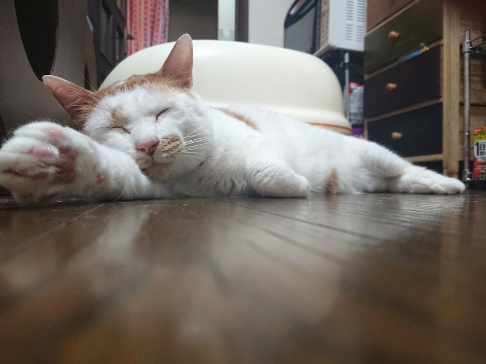 江戸川区平井:多頭飼育崩壊🚹カッパーくん:猫ドックの結果
