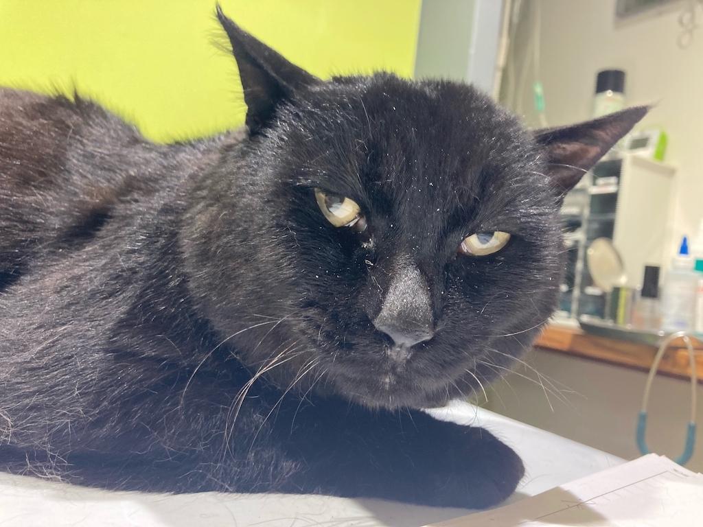 野良猫から飼い猫になったブルーナくんの検査に行ってきました😌