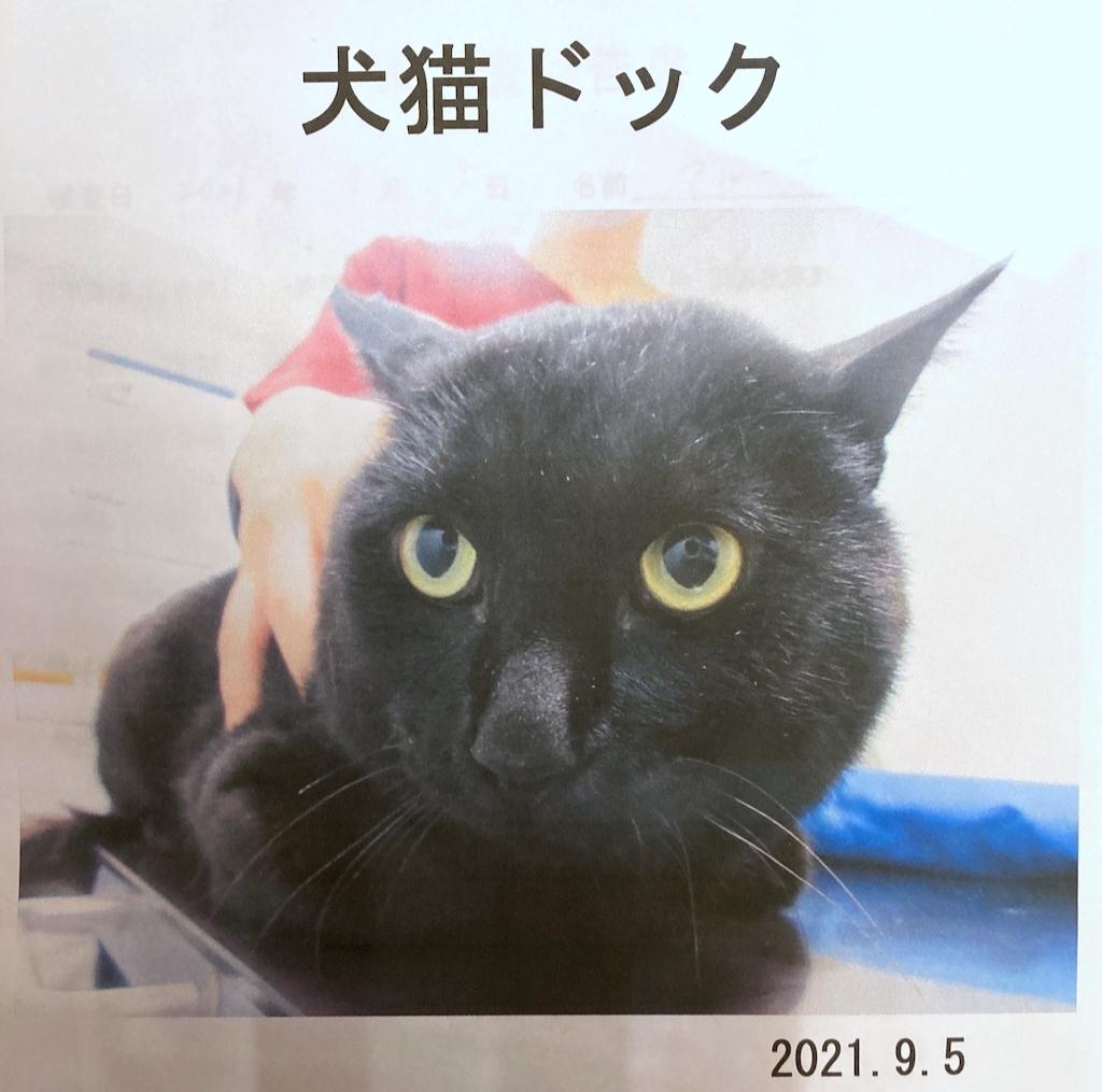 野良猫から飼い猫になったブルーナくんの猫ドックに行ってきました💝