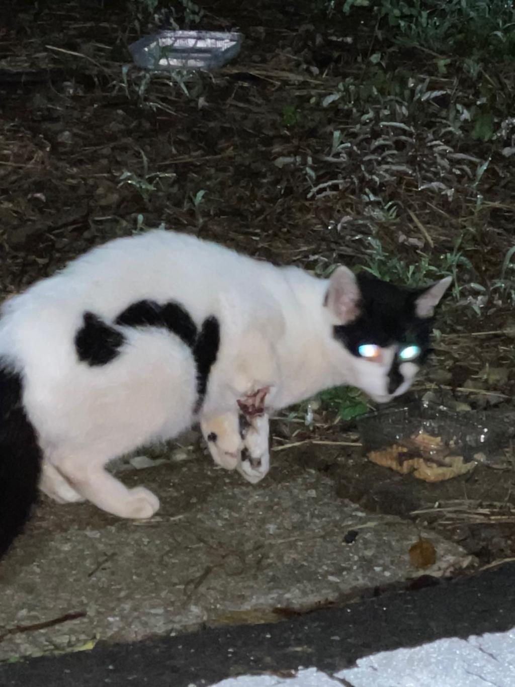 千葉県印旛郡酒々井町:トラバサミによる猫虐待事件:経過報告9/11
