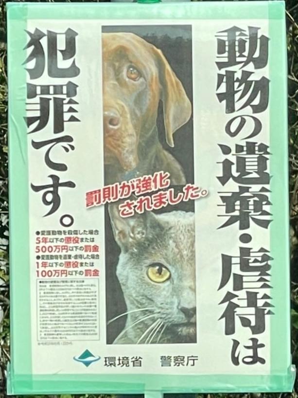 千葉県印旛郡酒々井町:トラバサミによる猫虐待事件:経過報告9/19