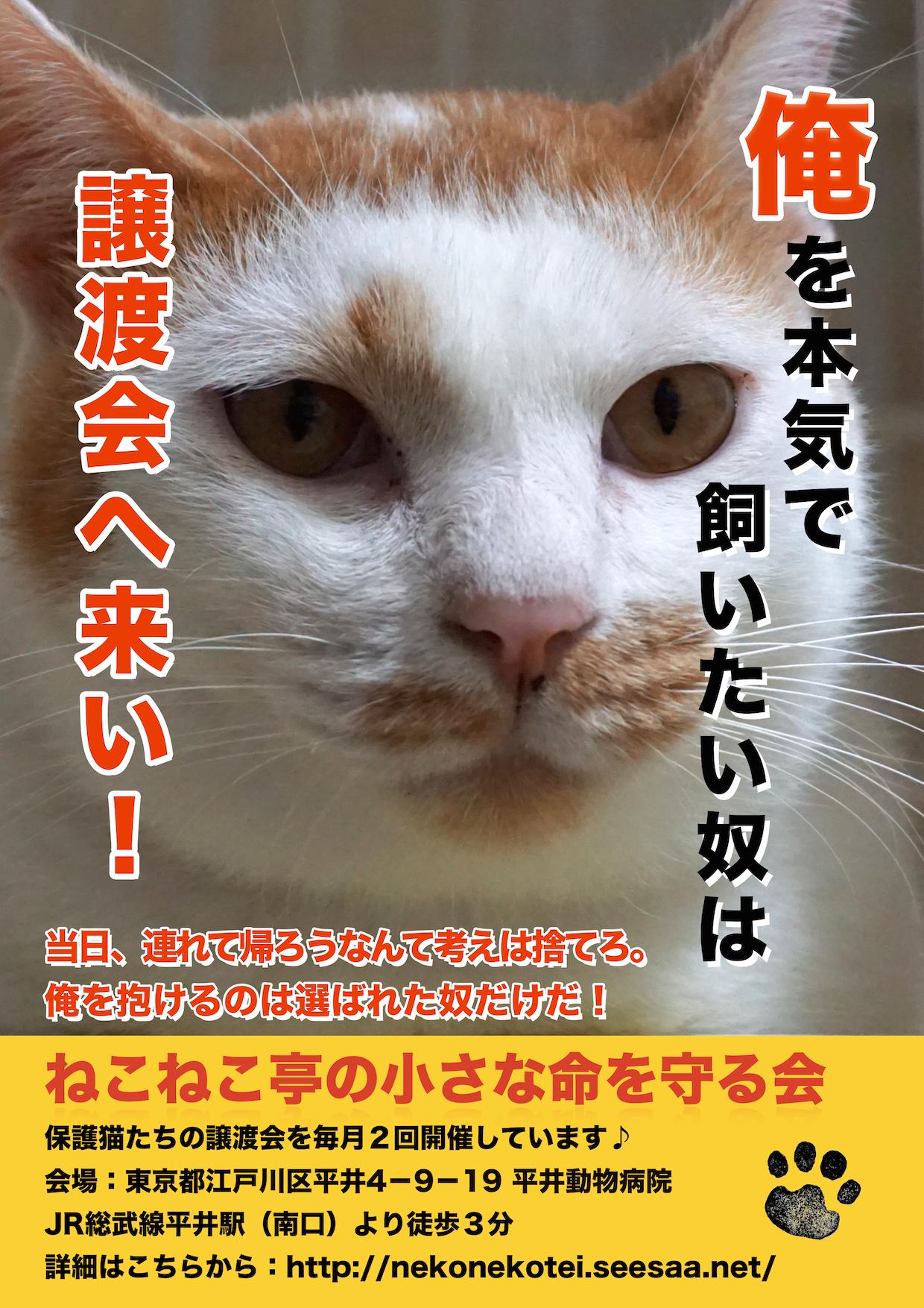 江戸川区平井:多頭飼育崩壊🚹カッパーくん:このポスターで、日本一有名になった男❣️