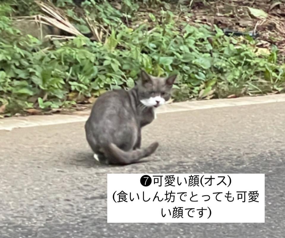 千葉県印旛郡酒々井町:トラバサミによる猫虐待事件:預かりさん・里親さん急募❗️