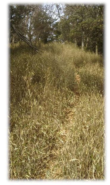 3笹薮、夏では道がわからなくなります。