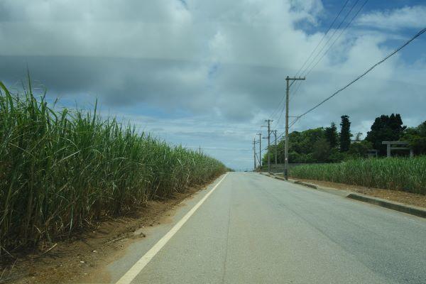 宮古島の道.JPG