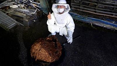 キイロスズメバチの巣3