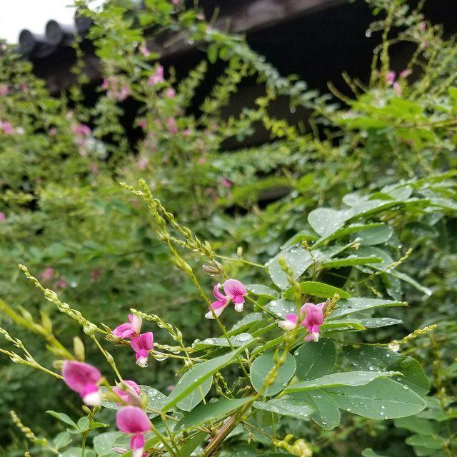奈良散歩(小)_003