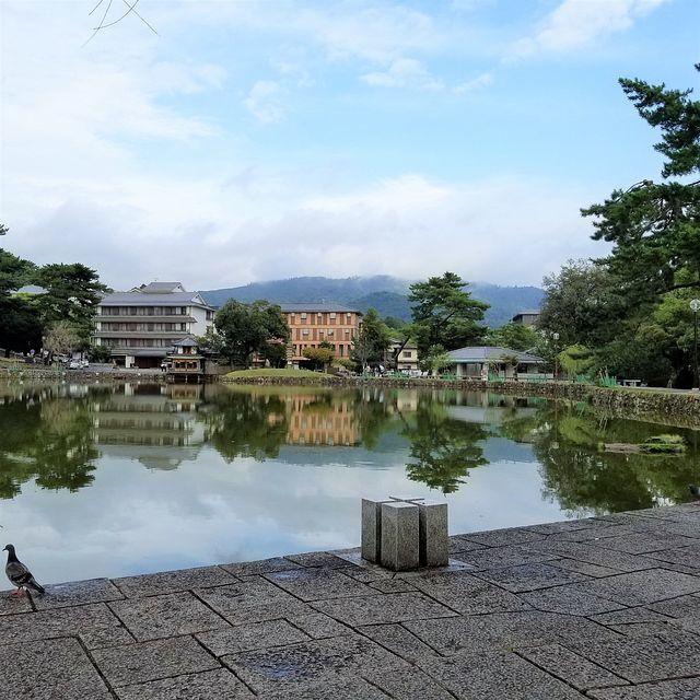 奈良散歩(小)_009