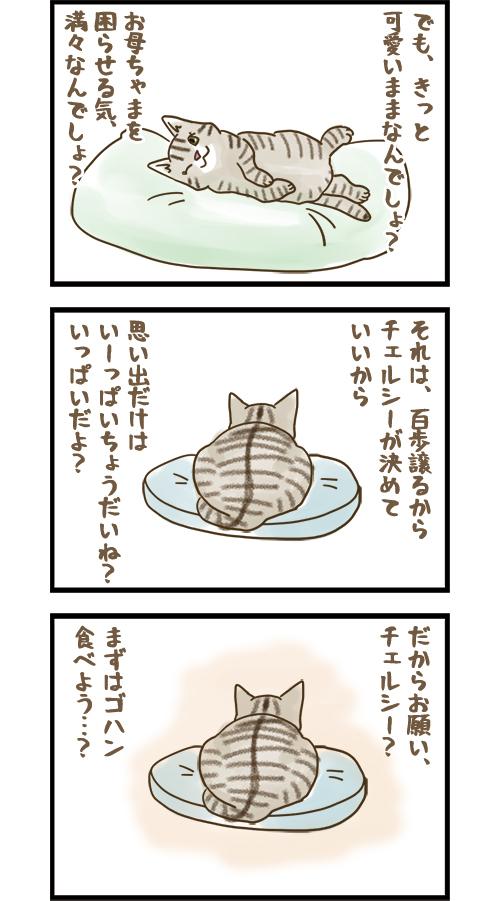24072021_catcomic_mini2.jpg