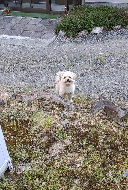 人外勢の躍進と犬は犬とFANBOX仮稼働のお知らせ サムネイル画像