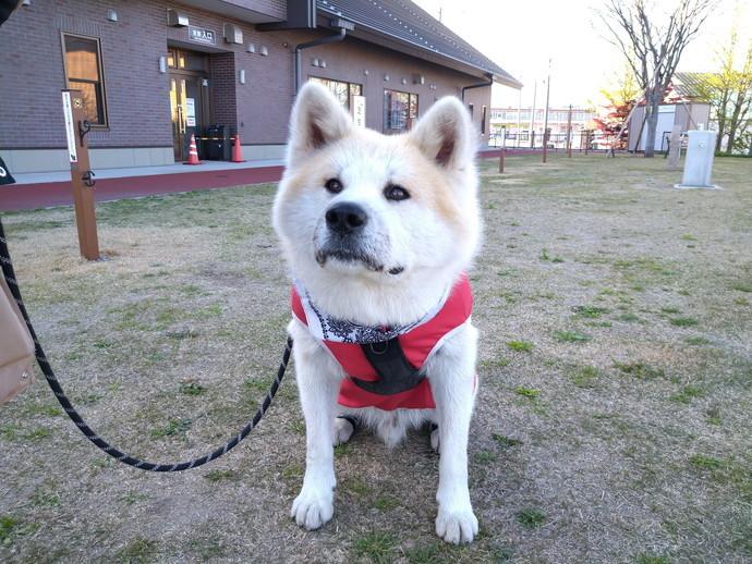 118話より、稲荷と犬の関係と無限に湧き出る大館ネタとこわ… サムネイル画像