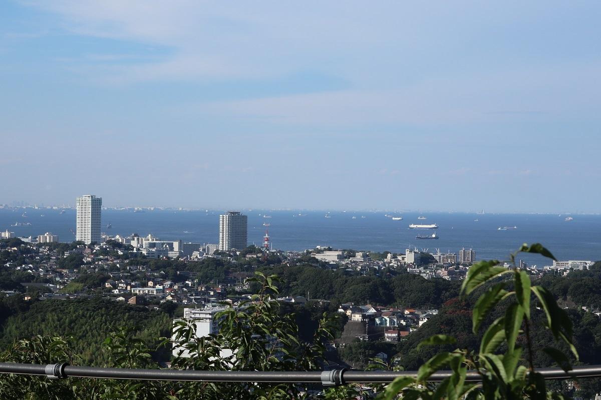 衣笠山から海を見渡す
